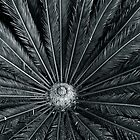 Cycad  by Julian Fulton-Boote