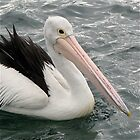Pelican by Christine Keech