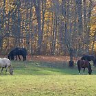 Grazing Near Golden Woods by mltrue