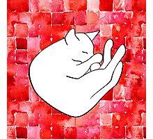 Snoozing cat Photographic Print