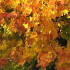 Autumn Color by Sandy Taylor
