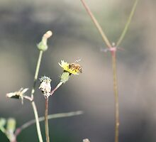 Nectaring Bee by dwntwnbrn