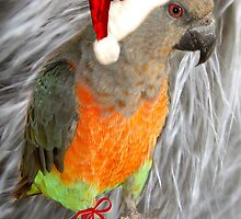 Season's Greetings Parrot by digitalmidge