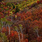 Palisades Fall, Idaho by Suraj Mathew