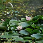 Pond of Beauty by lochithea