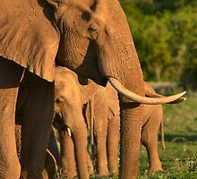Tsavo East Elephants by citrineblue