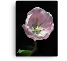 Pale Pink Memory Canvas Print
