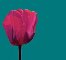 A Simple Tulip by Linda Miller Gesualdo