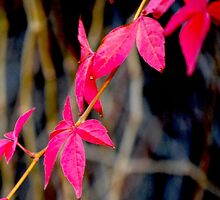 Red Red Leaves by babibell