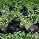 Gorillas chilling out by pljvv