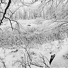 Field of Dreams by Yuri Lev