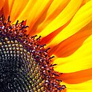 Sunflower by Eyal Nahmias
