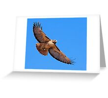 1101091 Red Tailed Hawk Greeting Card