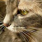 In Profile by ys-eye