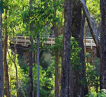 Hidden Bridge by footy