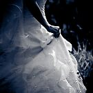 Wedding Dress by Christine  Wilson
