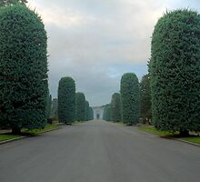 Tree Lined route at St Georges Cemetery by David Freeman