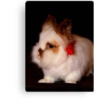 Lionhead bunny - Christmas Canvas Print