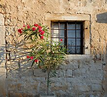 Oleander Flower in Bloom in Flower-pot (Croatia)  by Petr Svarc