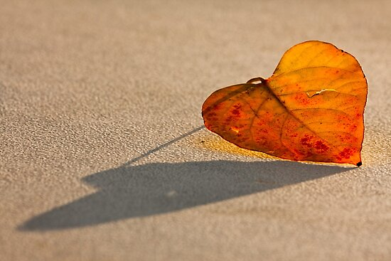 AUTUMN HEART by Sandy Stewart