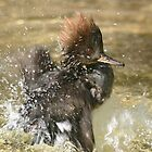 Having a splashing time. by Sandra O'Connor