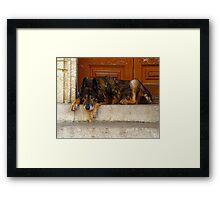 """WOLFDOG OF ARLES"" Framed Print"