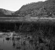 Glendalough Reeds by Caroline O'Reilly