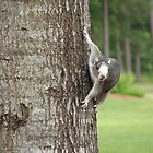 Up a tree. by toomanymeows