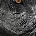 Thai Elephant  by Ryan Creevey