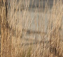 Shadows on Tall Grass - Conner Prairie by Artophobe