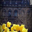 Yellow Tulips by Marcia Luly