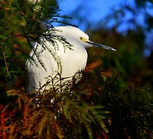 There's an Egret in those pines by LjMaxx