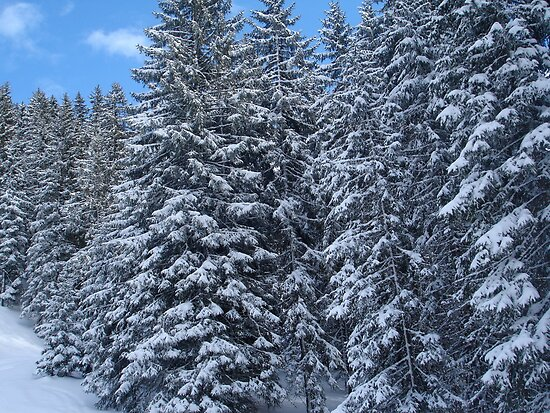 Snowy Trees in Austria by maxrandall