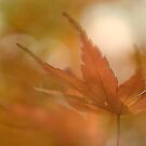 Autumn Bokeh by Jacky Parker