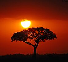 African Sunset by daisymae