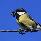 Tomtit with caterpillar by EHAM-spotter