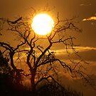 Sunrise Flight by Anima Fotografie