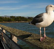 My friends the Seagull by ccostello