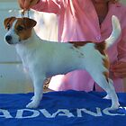 Tootsie, almost 6 mnths, Melbourne Cup Dog Show  by Frandiana