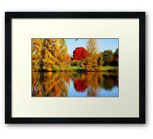 Fall Colors in Eugene Framed Print