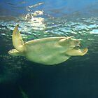 Sea Turtles in Vancouver by Equinox