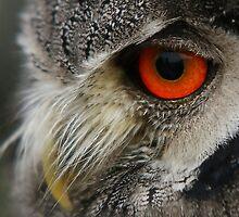 Owl  by Lindie