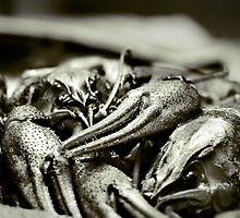 Crayfish by Alexandru C.
