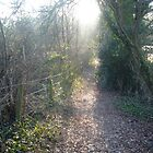 Forest Lane by maxrandall