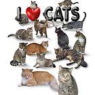 I love Cats by aura2000