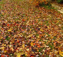 Fall colours on the ground by olehippy13