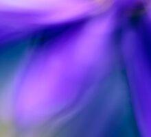 Beatiful Fall Flower by Silke Magino