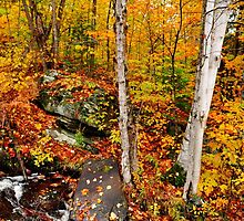Autumnal Brook by Nancy Barrett