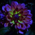 Illuminate by Jamie Lee
