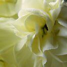 Cream Flower by Mark Willson